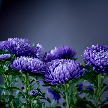 The Chrysanthemums Summary And Analysis